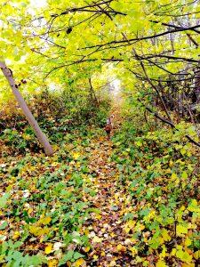 foto-16-10-16-09-11-54